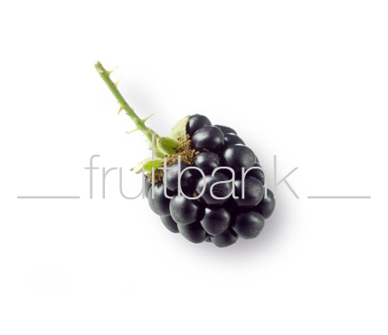 Fruitbank Foto: Brombeere UK008038