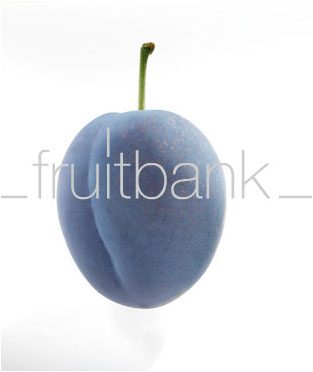 Fruitbank Foto: Pflaume UK032008