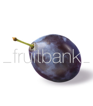 Fruitbank Foto: Pflaume UK032024