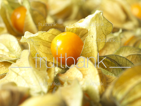 Fruitbank Foto: Physalis UK039001