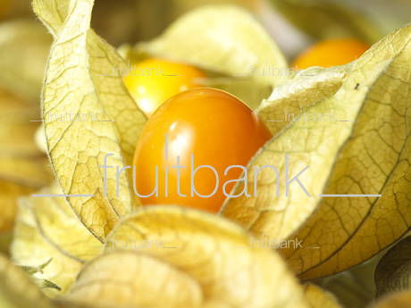 Fruitbank Foto: Physalis UK039003