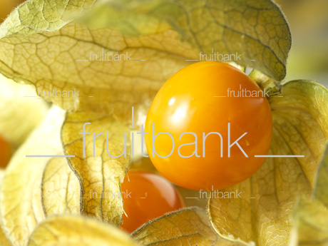Fruitbank Foto: Physalis UK039004