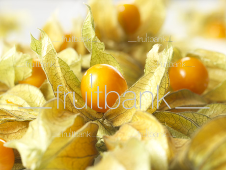 Fruitbank Foto: Physalis UK039005