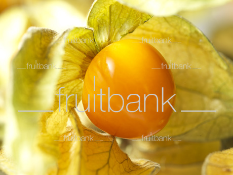 Fruitbank Foto: Physalis UK039007