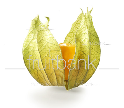 Fruitbank Foto: Physalis UK039010