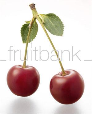 weichsel frucht